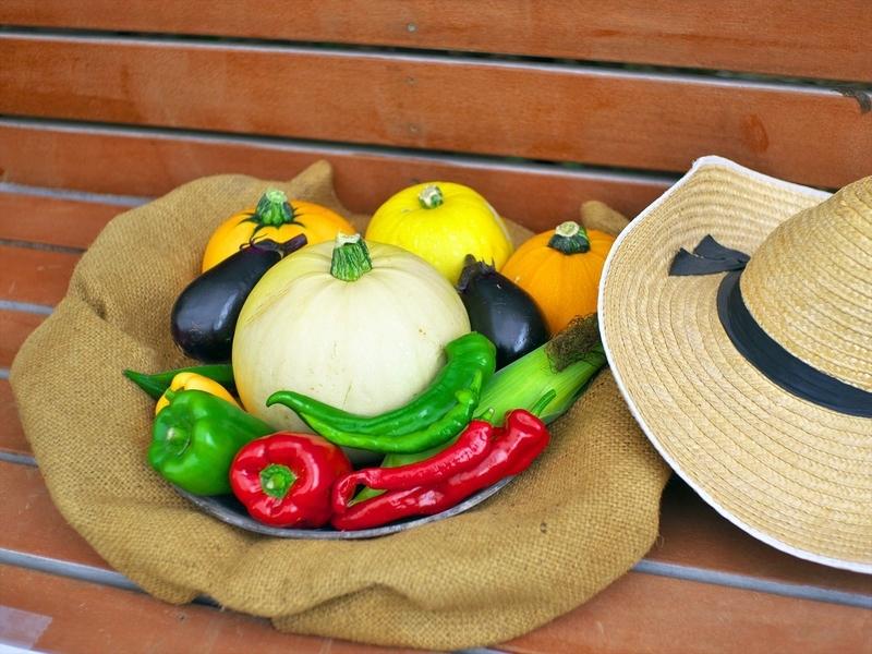 夏野菜の収穫@京都府立植物園