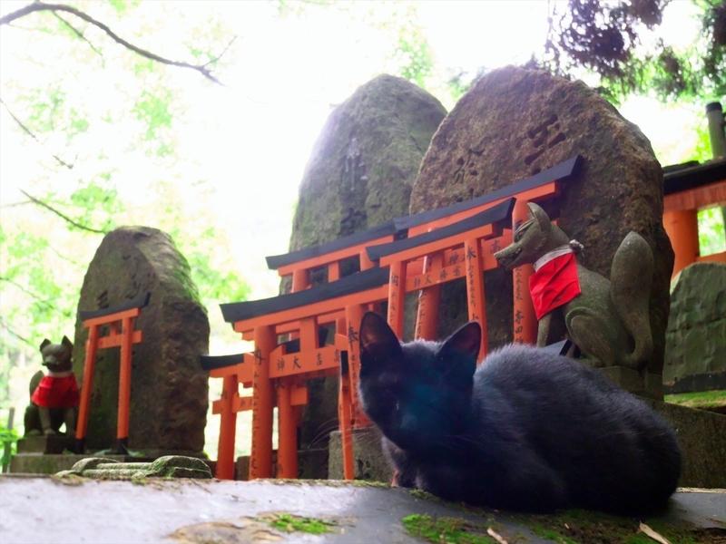 猫とお稲荷さん@伏見稲荷