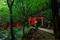 森に続く鳥居@伏見稲荷
