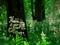 ヤブミョウガ咲く京都御苑