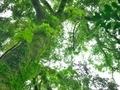 緑の世界@京都御苑