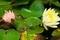 花の番人@京都府立植物園