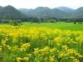 オミナエシ咲く越畑