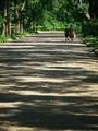 木漏れ日ストライプ@京都府立植物園