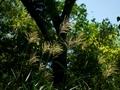 秋の気配@京都府立植物園