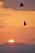 夕日とカラス2@東大谷墓地