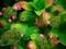 盛りを過ぎて@京都府立植物園