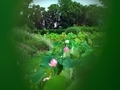 破れた葉から覗く蓮池の風景@京都府立植物園