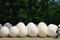 巨大な卵@下鴨神社