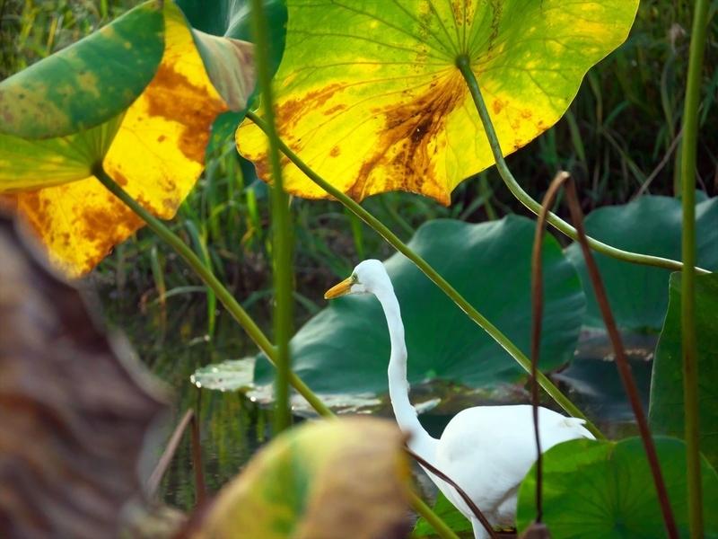 黄色の日傘@京都府立植物園