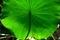 緑のスクリーン@京都府立植物園