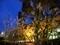 夜のネコジャラシ@京都高野