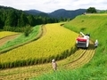 収穫の時@京都樒原