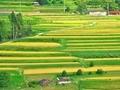 棚田の層状構造@京都樒原