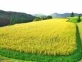 山上の棚田@京都樒原