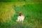 2匹の野犬@京都樒原