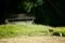 山へ帰る野犬@京都樒原