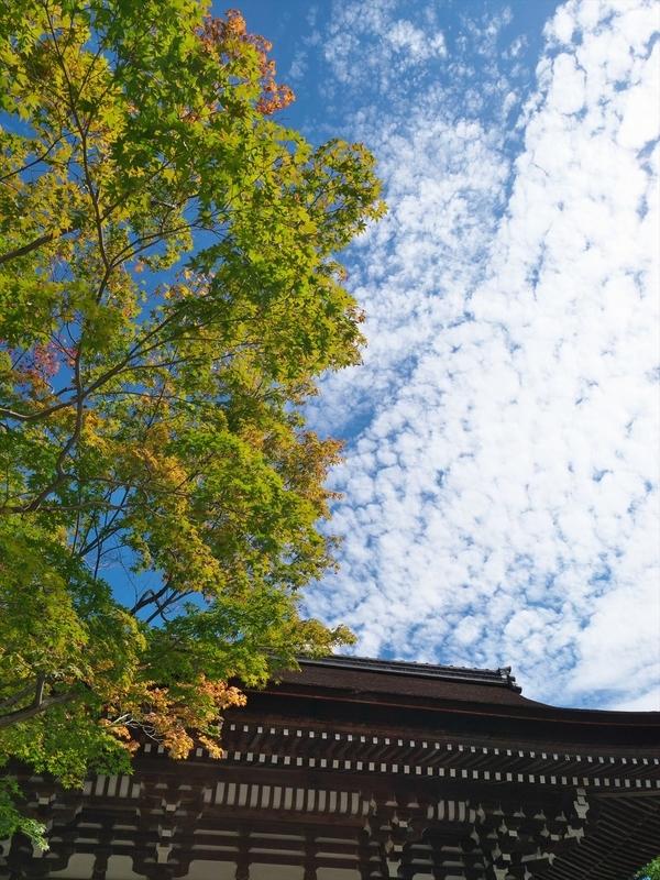 秋晴れの松尾大社
