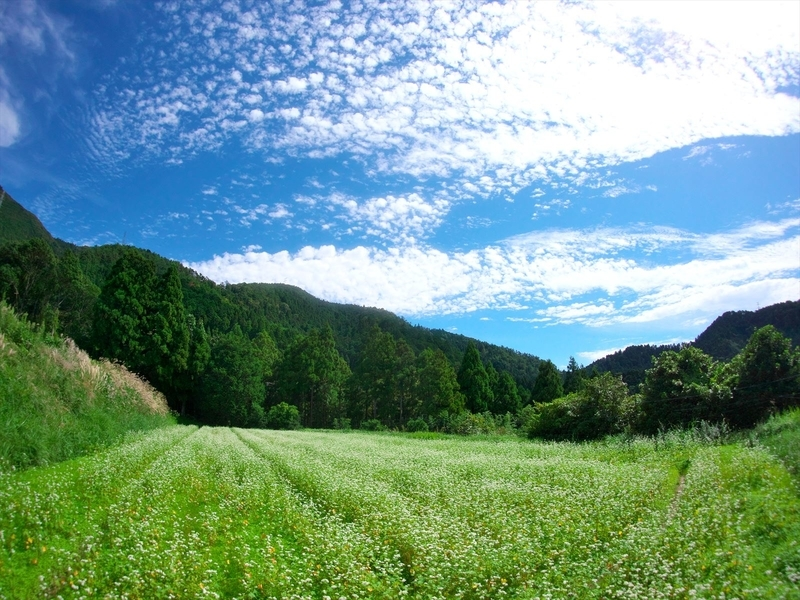 蕎麦畑と秋の空@樒原