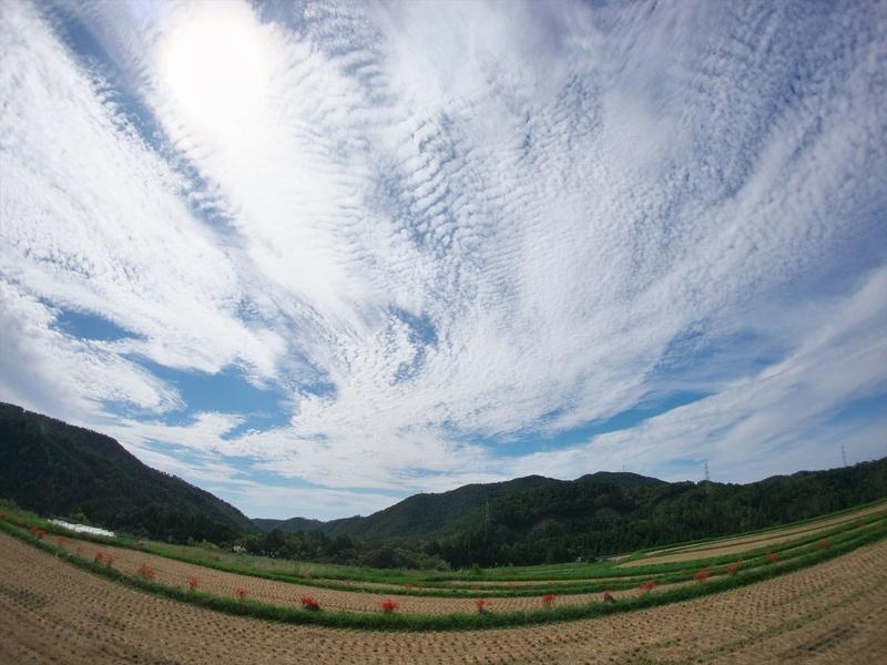 空に広がる鰯雲@樒原