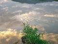 水面の夕景@広沢池