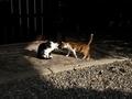 陽だまりの猫@革堂行願寺