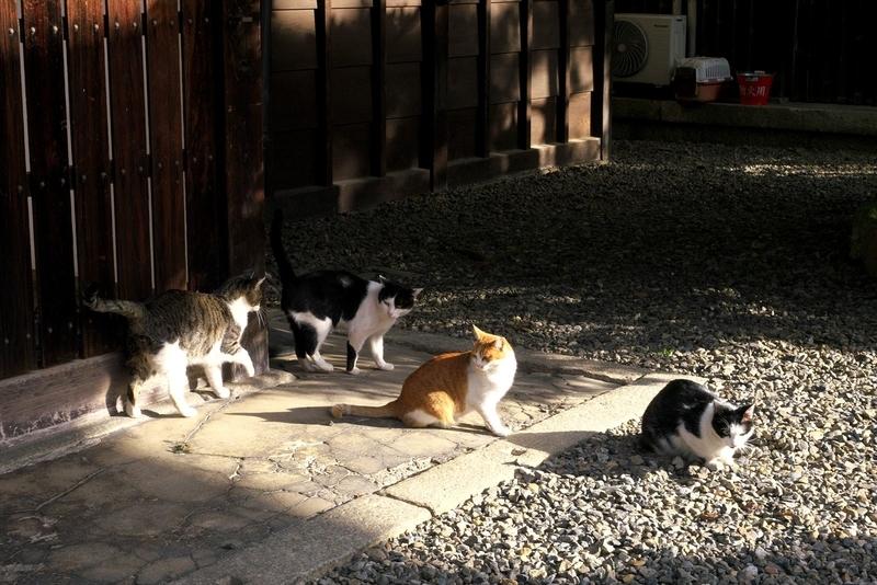 陽だまりの猫2@革堂行願寺