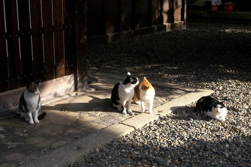 陽だまりの猫3@革堂行願寺