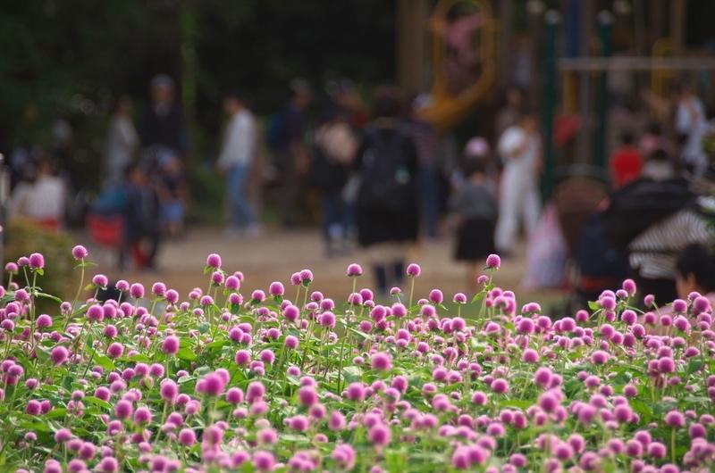 賑わう植物園@京都府立植物園