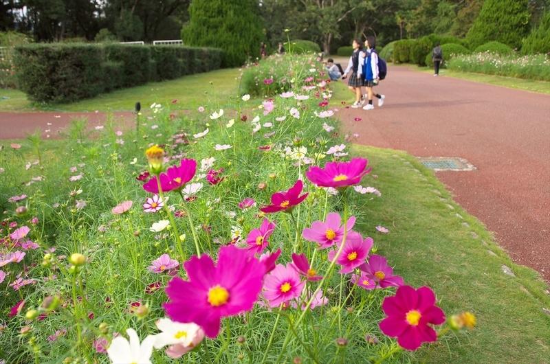 コスモス咲く植物園@京都府立植物園