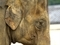 象の横顔@京都市動物園
