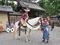 白馬に乗って@時代祭り