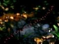 赤い連凧@京都府立植物園