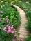 キブネギク(シュウメイギク)咲く小道@京都府立植物園