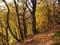 百里ヶ岳の紅葉