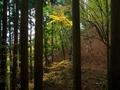 杉林から望む秋の彩り@京都花背