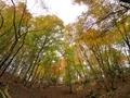 秋の広葉樹林@花背