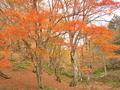 色づく秋の山@八丁平