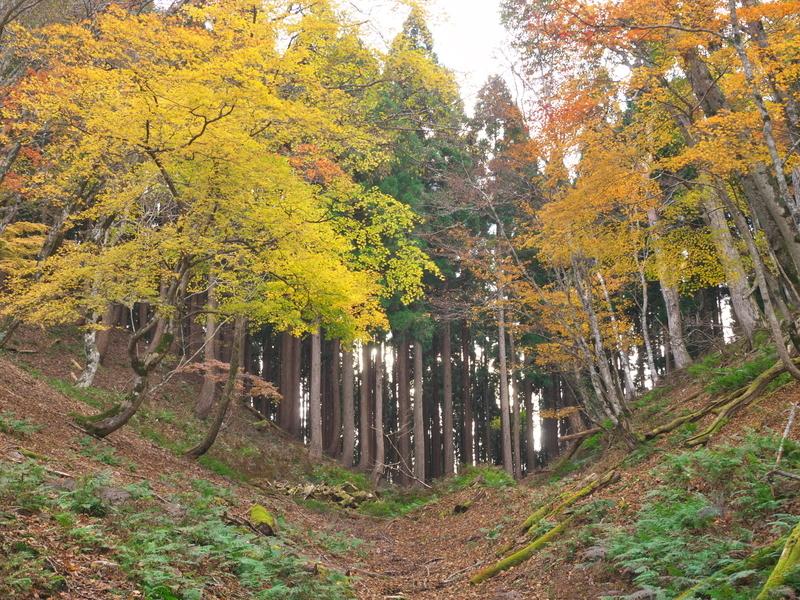 色づく広葉樹と針葉樹の境の峠@八丁平