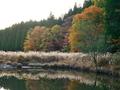 秋色づく山の池@大原尾越