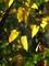 黄色のハート@京都府立植物園