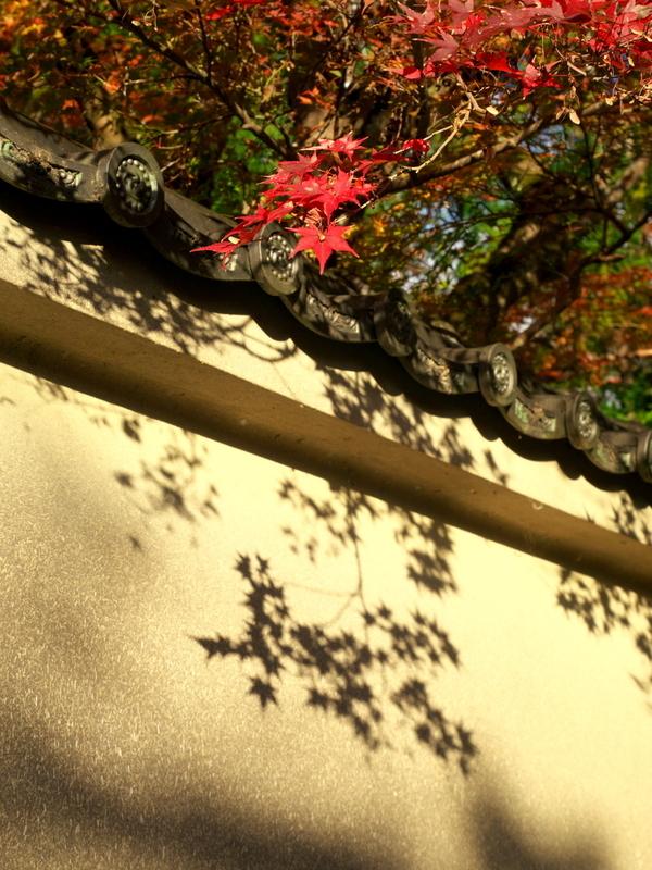 塀に映る赤カエデ@赤山禅院