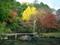 色づく噴水池@三宅八幡宮