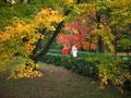 秋の小道を行く@京都御苑