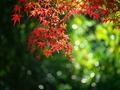 紅葉真っ盛り@鷺森神社