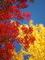 赤と黄色のせめぎあい@鷺森神社