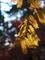 西日を浴びるメタセコイヤ@京都府立植物園