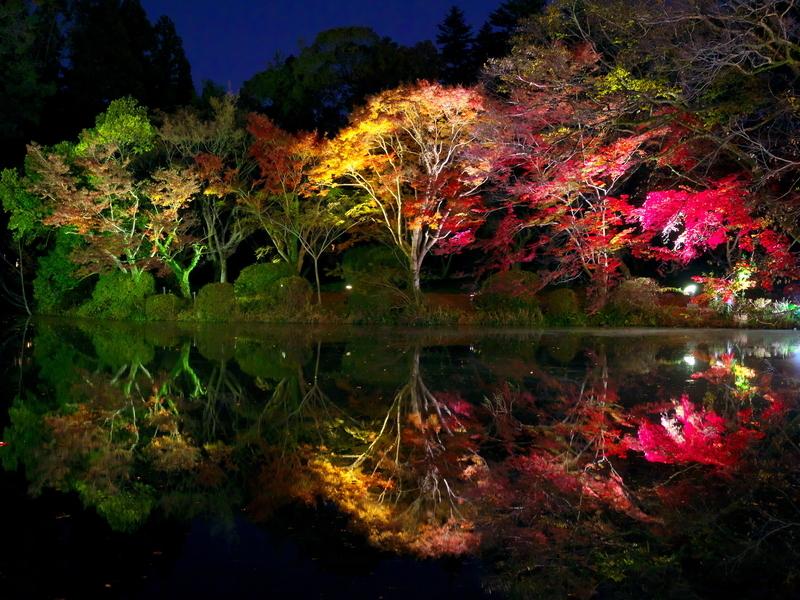 水面に映る紅葉ライトアップ@京都府立植物園