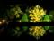 夜の水鏡@京都府立植物園