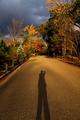 西日を浴びて@京都府立植物園